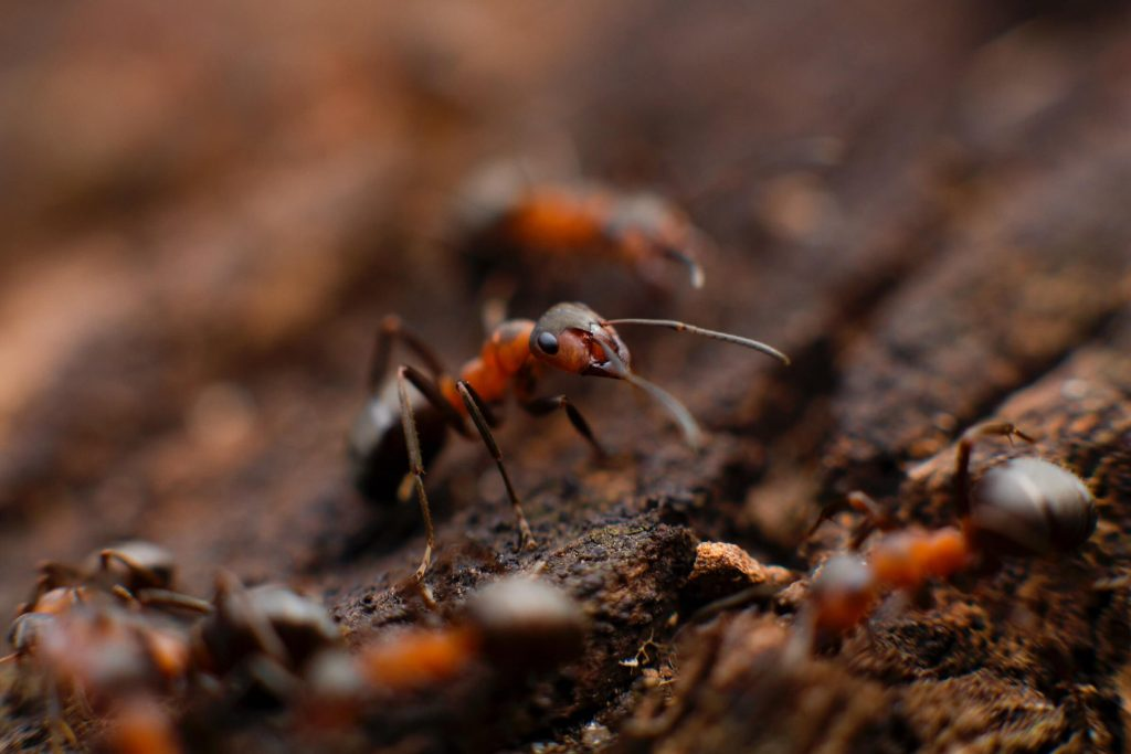 Ant Control Dayton Ohio