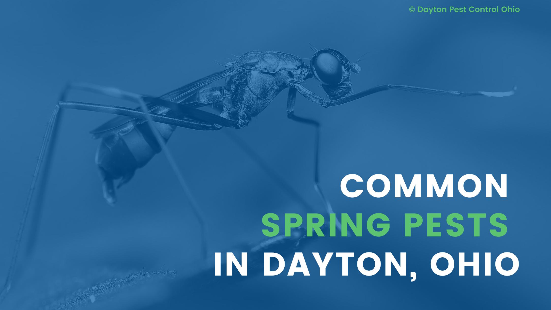 Pest Control Dayton Ohio - Common Spring Pests