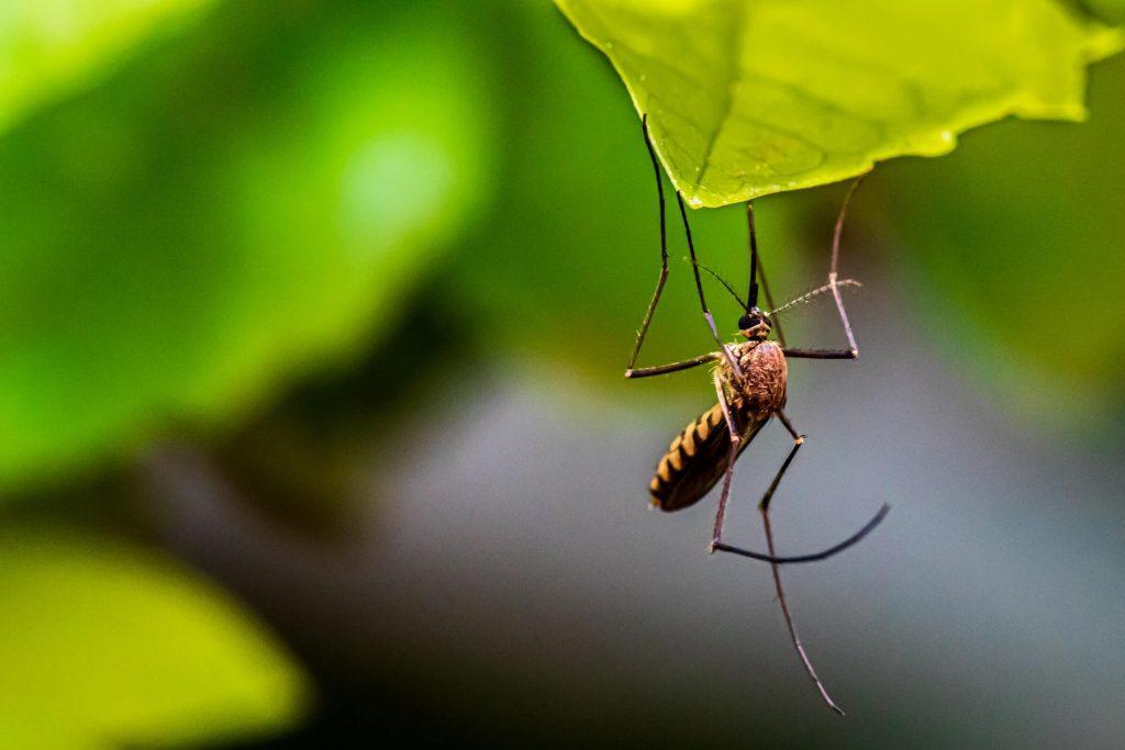 Mosquito Control Dayton Ohio