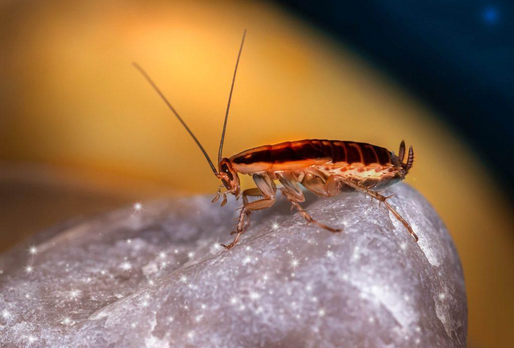 Roach Control Dayton Ohio