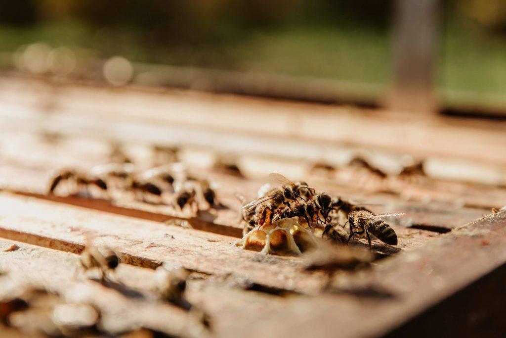Termite Control Dayton Ohio